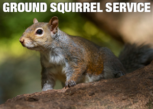 Ground Squirrel invasions in landscapes are very hard to stop.