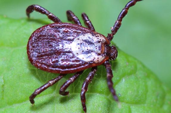ticks san diego