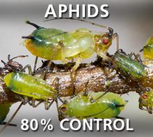 Corky's Aphids Pest Control