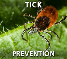Tick Prevention