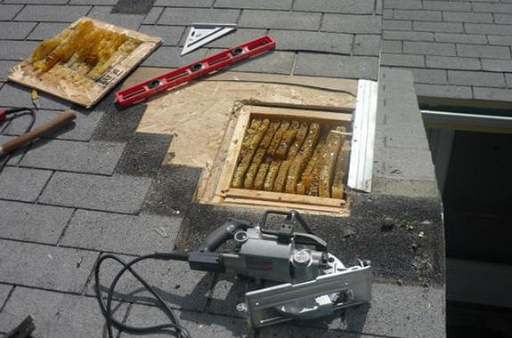 Bee Repair