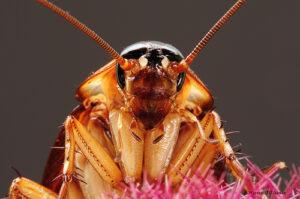 cockroach_zpseae633dd