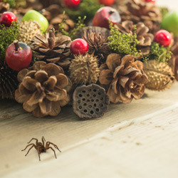 spider-found-in-holiday-decorations