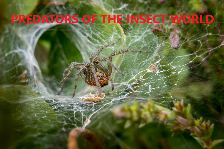 Predators of the insect world